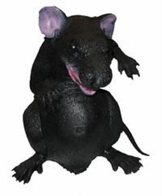 """Rat  """" Groot """""""