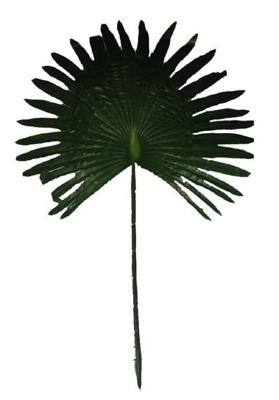 Decoratie palmblad